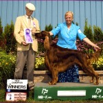Kathy and Her Irish Setters